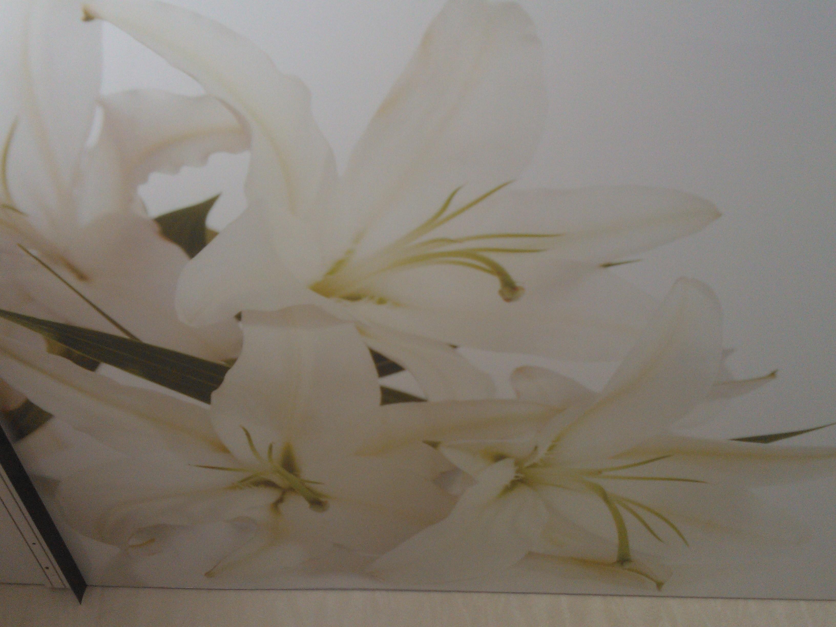 Фото двухуровневого натяжного потолка, цвет светло